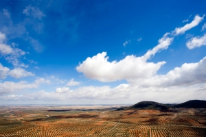Olive Landscape
